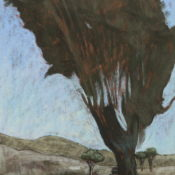 L'eucalyptus II - 80 x 55